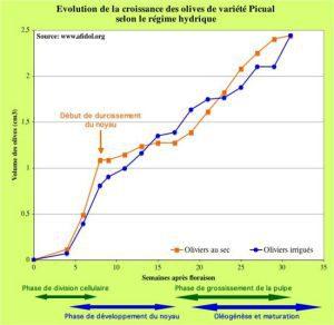 550px-Graph_croissance_olive_au_sec_et_irrigué
