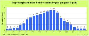 La consommation en eau de l'olivier